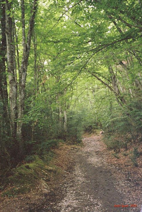 Caminho para Larrassoaña