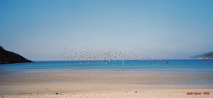 Revoada de pássaros em uma praia em Redonda