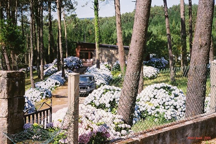 Hortênsias invadindo uma casa, quase em Finisterre